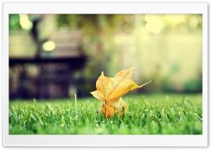 HD Leaf
