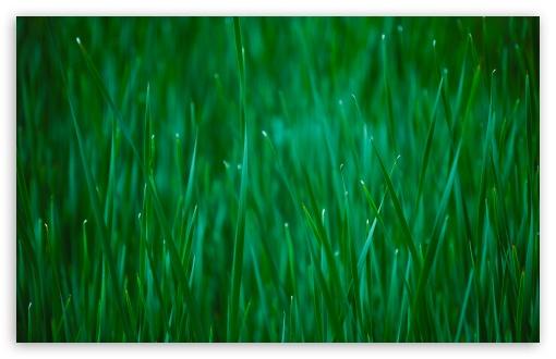 Download Reeds UltraHD Wallpaper