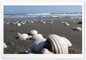 Anzali Beach