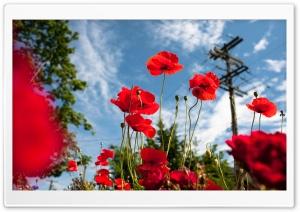 Vancouver Poppies