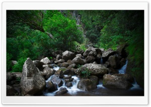 Rocky Forest Creek