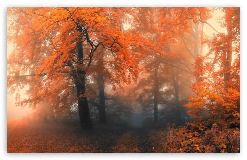 Download Forest UltraHD Wallpaper