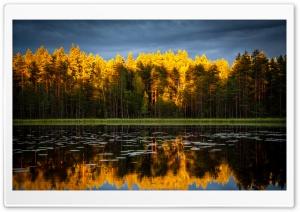 Coniferous Forest, Golden...