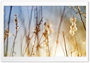 Dry Field Grass
