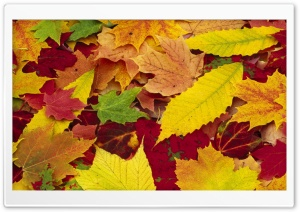 Autumn Leaves Changing Color