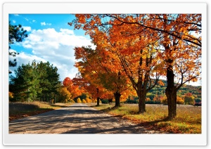 Countryside Road Autumn