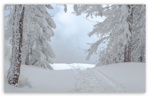 Download White Winter Snow Scene UltraHD Wallpaper