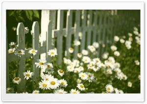 Flowers Near Fence