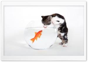 Kitten vs. Fish