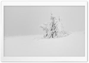 Winter White Snow Tree Aesthetic