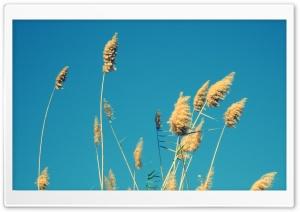 In A Blue Sky