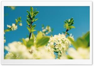Blue Sky, Spring