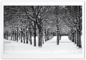 Trees, Winter, Black and White