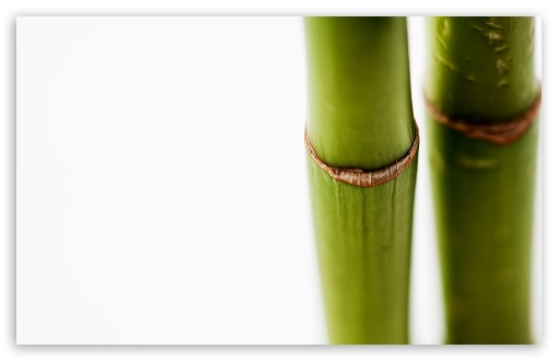 Download Bamboo Stems On White Background UltraHD Wallpaper