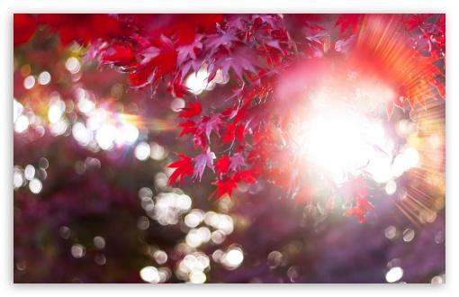 Download Let The Sun Shine In UltraHD Wallpaper