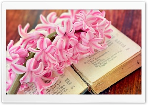 Spring Flower Open Old Book