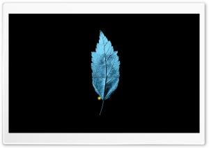 Fringe TV Series   A Leaf...