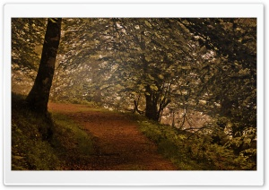Mountain Forest Path