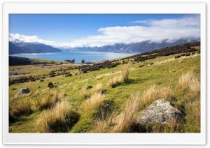 Landscape In New Zealand