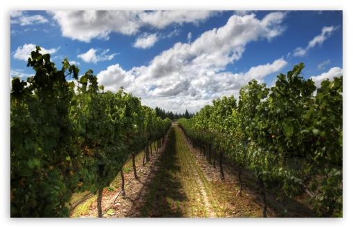 Download The Wines Of New Zealand UltraHD Wallpaper