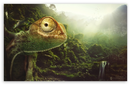 Download The Cheerful Chameleon UltraHD Wallpaper
