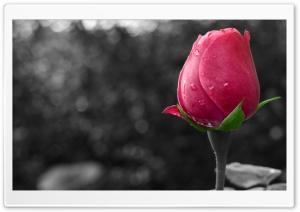 Flower Colour Splash