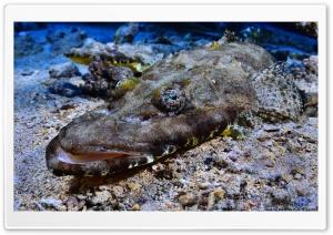 Crocodilefish   Tentacled...