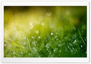 Wet Grass Bokeh, Summer