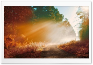 Misty Forest Road, Autumn