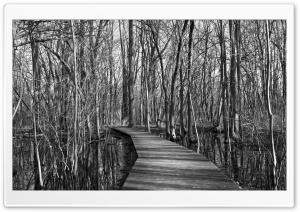Swamp, Trees, Black and White