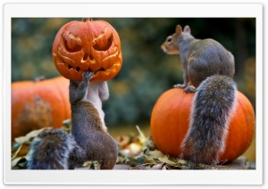 Halloween Squirrels