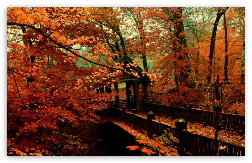 Download A Bridge to Autumn UltraHD Wallpaper