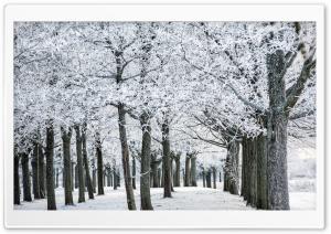Frozen Trees, Winter