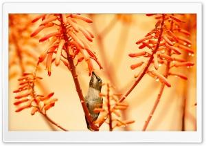 Hummingbird After The Rain