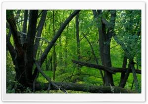 Seep Green - Minnesota Valley...