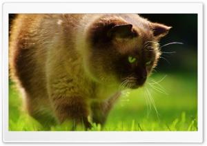 Explorer Cat
