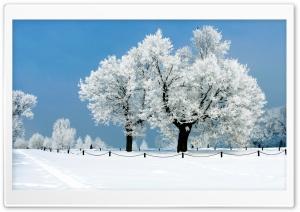 White Tree - Winter