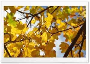 Autumn Leaves - 4K resolution...