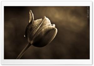The Good Tulip