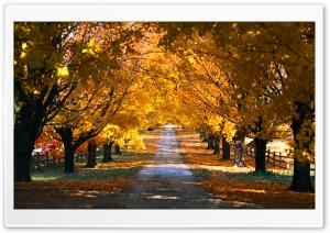 Tree Tunnel Road Autumn