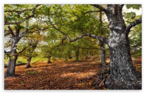 Download Fall Forest UltraHD Wallpaper
