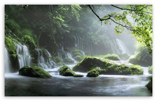 Download Jungle Paradise UltraHD Wallpaper