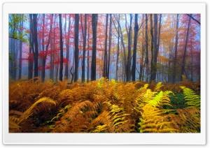 Beautiful Colored Trees