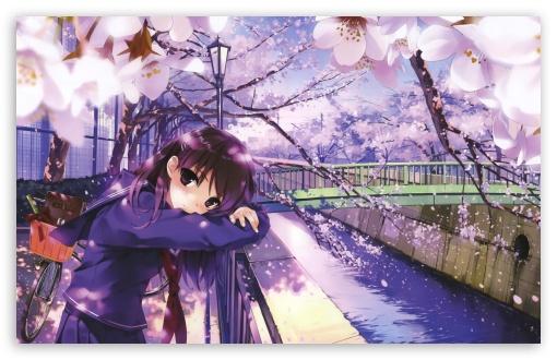 Download Sakura Spring UltraHD Wallpaper