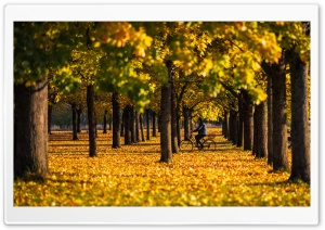 Autumn, Yellow, Foliage, Bike...