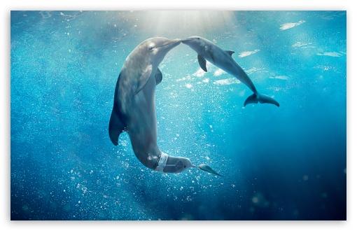 Download Dolphin Tale 2 Movie 2014 UltraHD Wallpaper