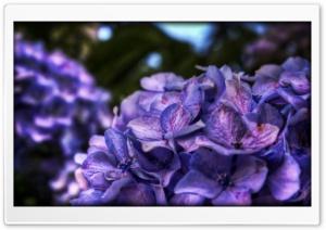 Dreamy Purple Flower
