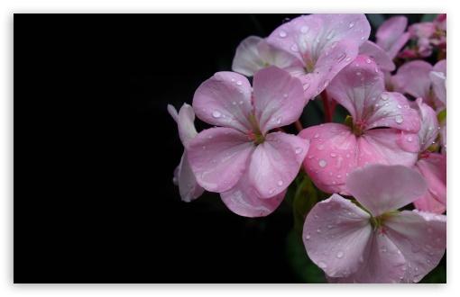 Download Spring Flower UltraHD Wallpaper