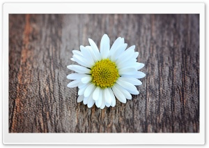 A Flower on a Wooden Table