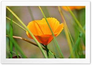 Orange Flower With Reeds